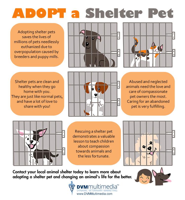 adopt-a-pet-info