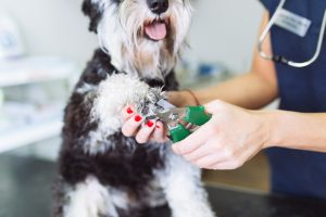 Safely-Trim-Your-Dog's-Nails