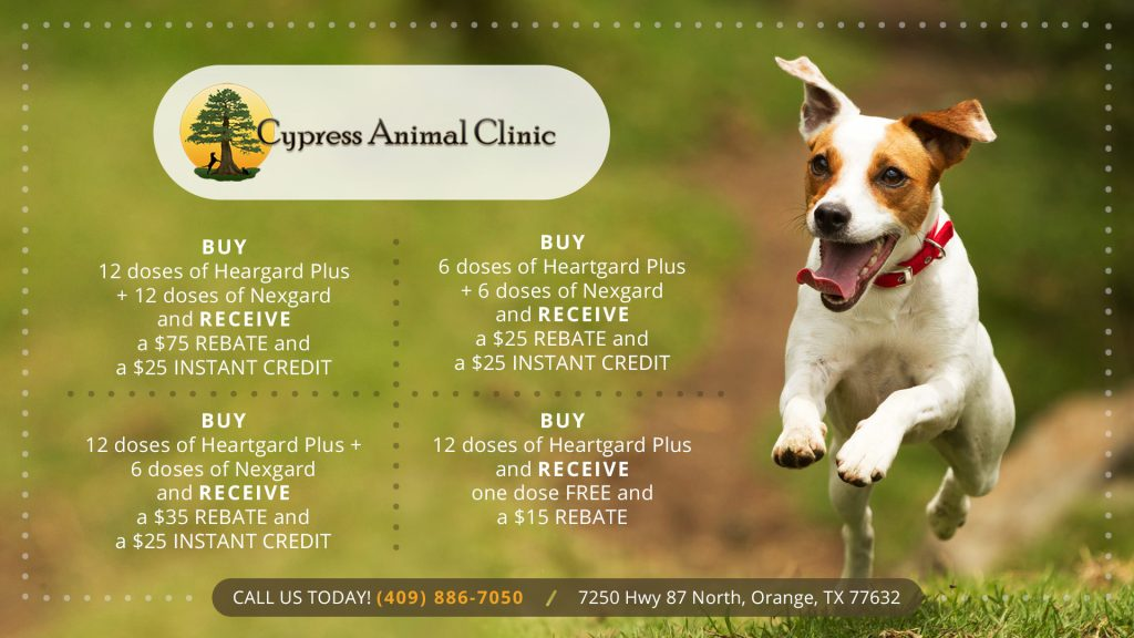 Cypress-Animal-Clinic-special